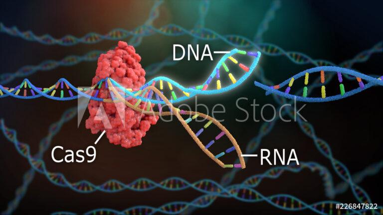 Crispr DNA Editor